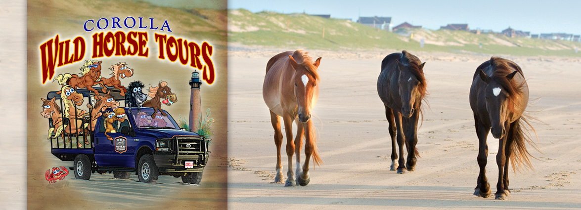 Coupons | Corolla Wild Horse Tours | Outer Banks, NC