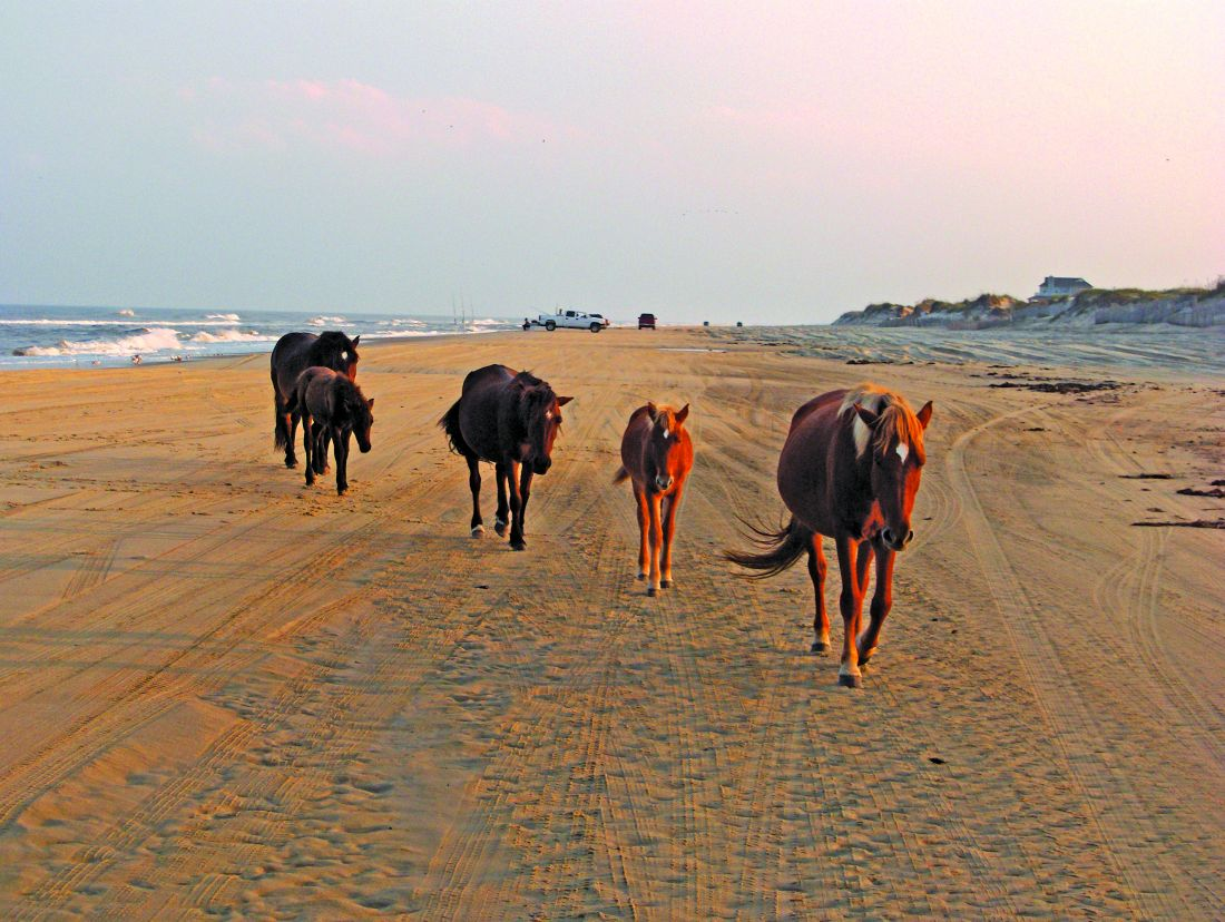 Gallery Corolla Wild Horse Tours Outer Banks Nc