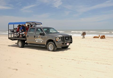 Corolla Wild Horse Tours, Family Adventure — Afternoon Horse Tours